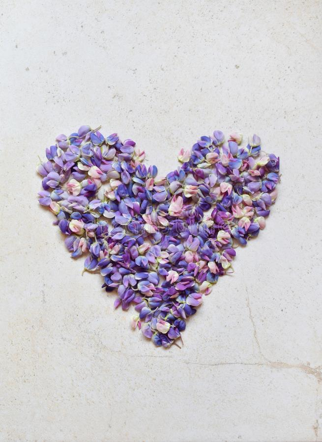 Heart of pink and purple lupine flowers. Birthday, Mother`s day, Valentine`s Day, March 8, Wedding card or invitation. Festive royalty free stock image