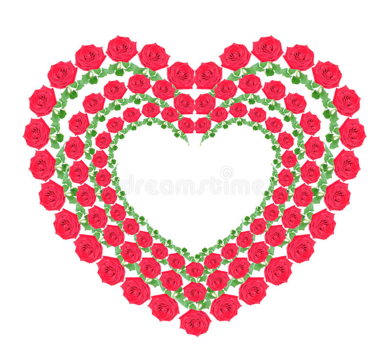 Heart from red roses. On a white background, it is isolated stock photo