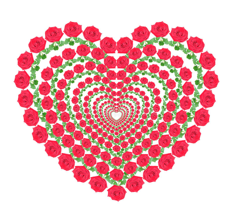 Heart from red roses. On a white background, it is isolated stock photography