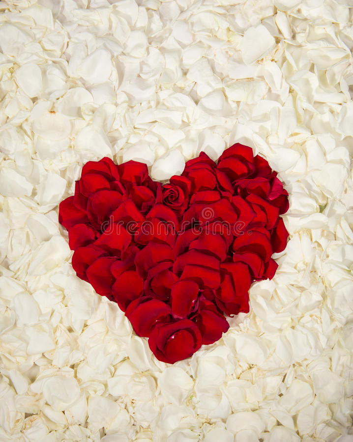 Heart of red roses. Beautiful heart of red roses` petals isolated on white roses` petals royalty free stock photography