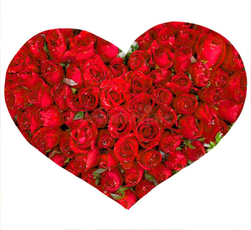Heart Red Roses Flower Isolated. On White Background royalty free stock photography