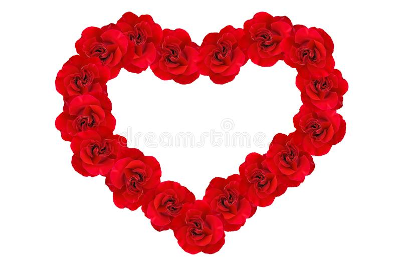 Heart of red roses. Heart background of red roses isolated on white background. Romantic Heart of red roses. Roses in a heart shape. Background of hearts royalty free stock photo