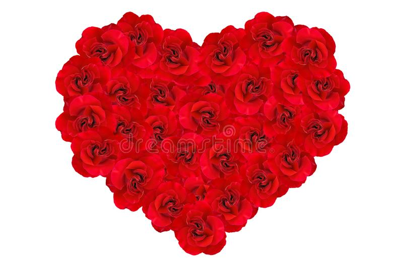 Heart of red roses. Heart background of red roses isolated on white background. Romantic Heart of red roses. Roses in a heart shape. Background of hearts stock photo