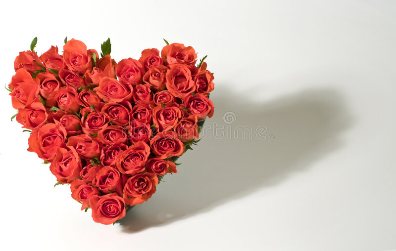 Heart of roses. With shadow royalty free stock photography