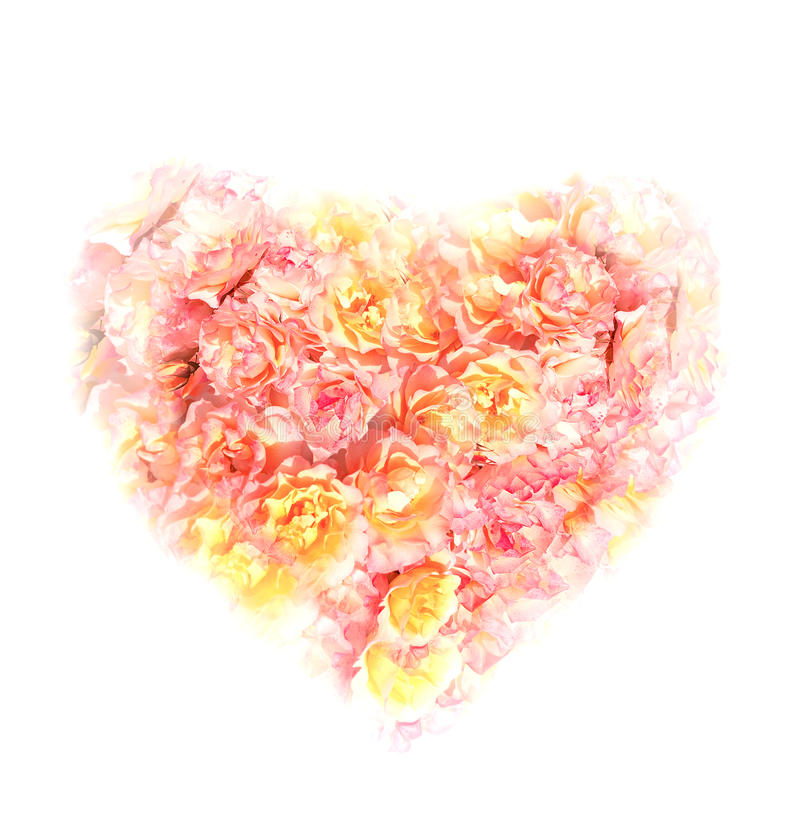 Heart of roses on white background. Bright Heart of roses on white background royalty free stock photos