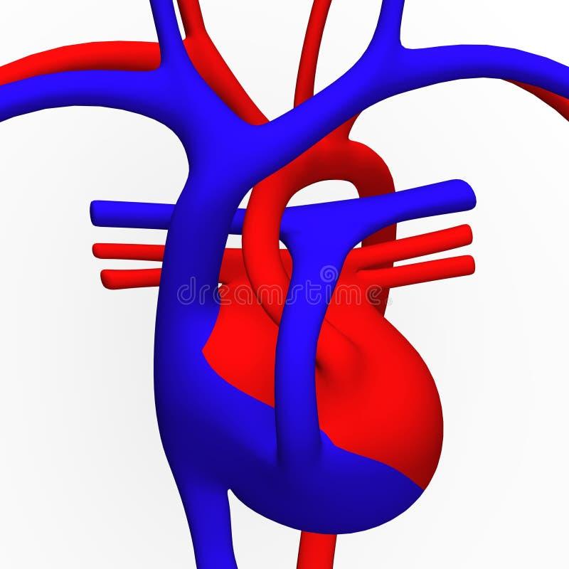 Heart Scheme Royalty Free Stock Photos