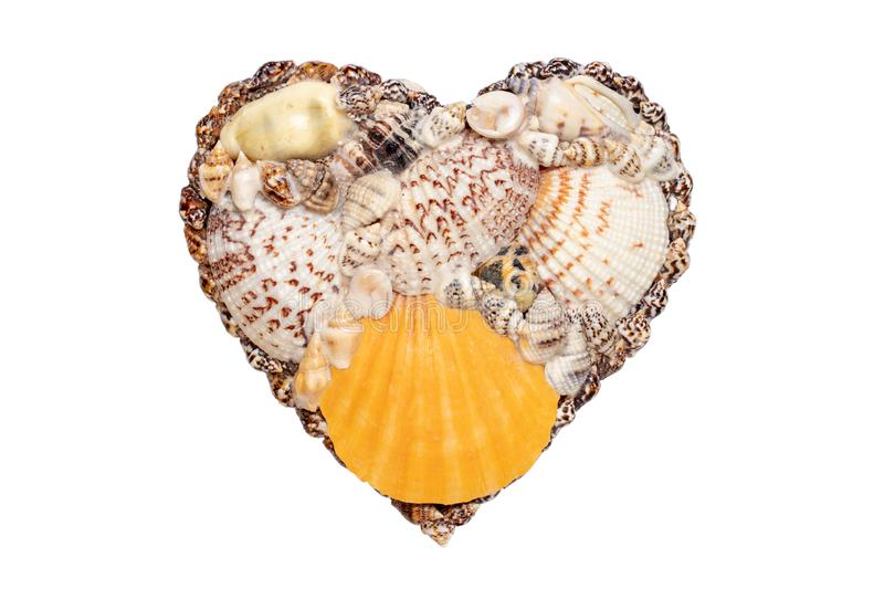 Heart sea shell background. Closeup of seashell heart isolated on a white background. Design element for valentine, wedding, royalty free stock images
