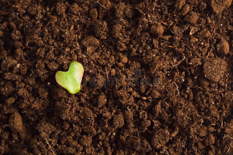 Heart shape of green leaf over dry ground, Earth day concept royalty free stock photos