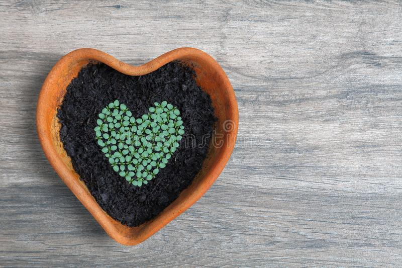 Heart shape of home grown young green vegetable seedling sow and grow in heart shaped terracotta pot on bright aged wooden potting royalty free stock images