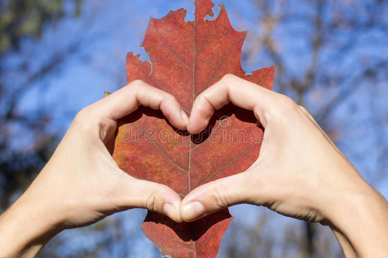 Heart shape made of girl hands over autumn leaf royalty free stock photo