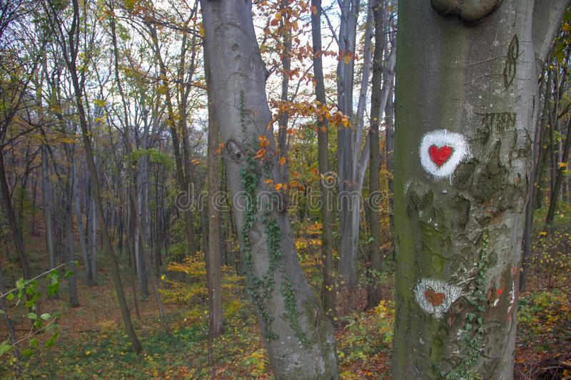 Heart shape painting at tree surface in park of Love at Fruska Gora, Serbia. Heart shape painting at tree surface at the park of Love at Fruska Gora, Serbia royalty free stock photography