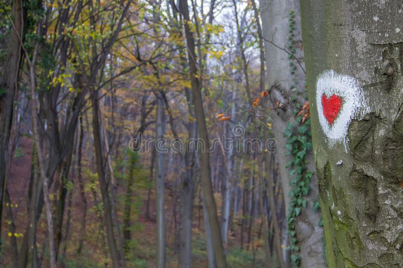 Heart shape painting at tree surface in park of Love at Fruska Gora, Serbia. Heart shape painting at tree surface at the park of Love at Fruska Gora, Serbia stock photography