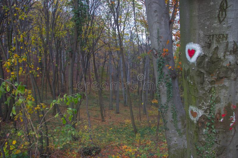 Heart shape painting at tree surface in park of Love at Fruska Gora, Serbia. Heart shape painting at tree surface at the park of Love at Fruska Gora, Serbia stock photo