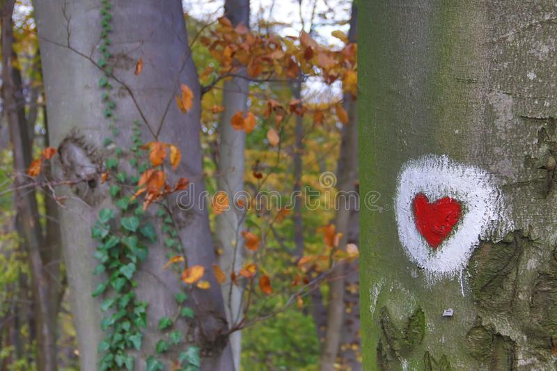 Heart shape painting at tree surface in park of Love at Fruska Gora, Serbia. Heart shape painting at tree surface at the park of Love at Fruska Gora, Serbia royalty free stock images