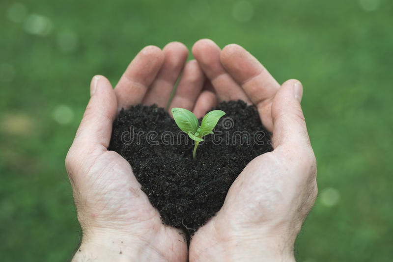 Heart shape soil. Man's hands ho0lds heart shape soil with bud stock photography