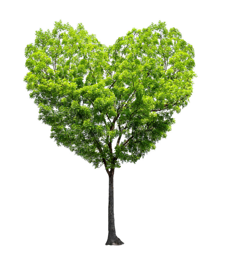 Heart shape tree. Isolated over white background - Love and nature concept royalty free stock image