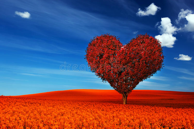 Heart shape tree with red leaves on flower field. Love royalty free stock photo