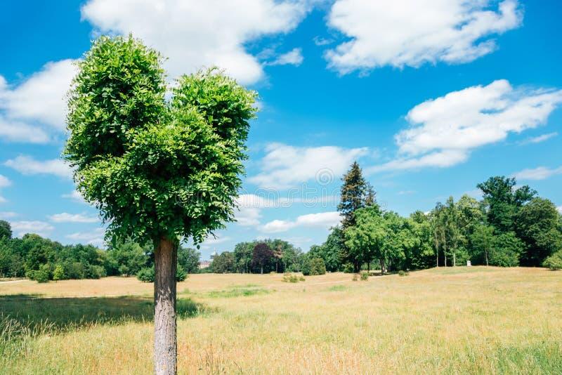 Heart shape tree at Sanssouci park in Potsdam, Germany. Nature scenery royalty free stock photo