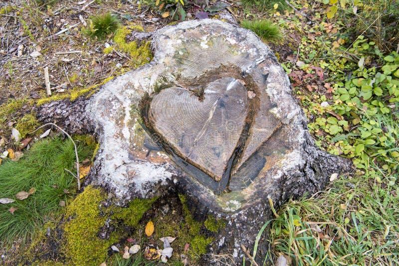 Heart shape in tree stump stock image