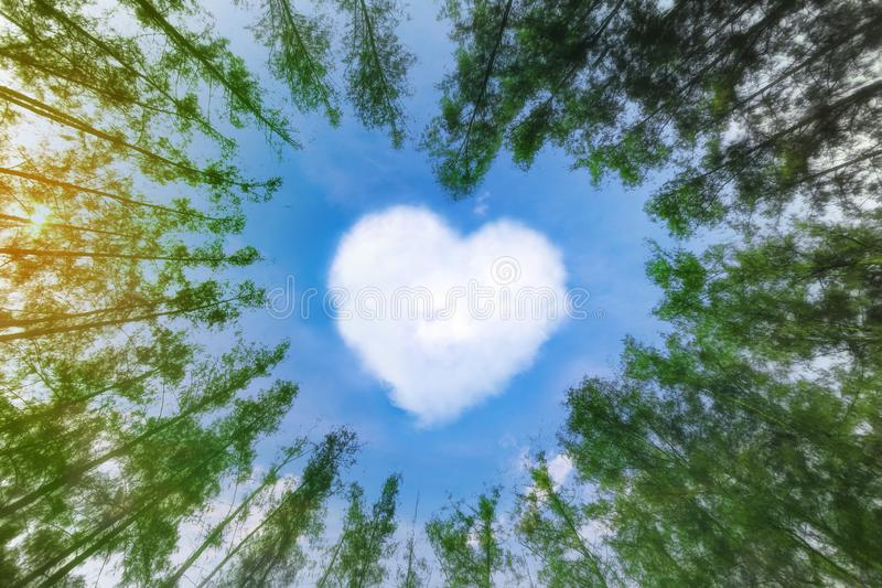 Heart shaped cloud over blue sky surrounded by pine trees. White cloud in the shape of hearts in the blue sky surrounded by pine stock photo