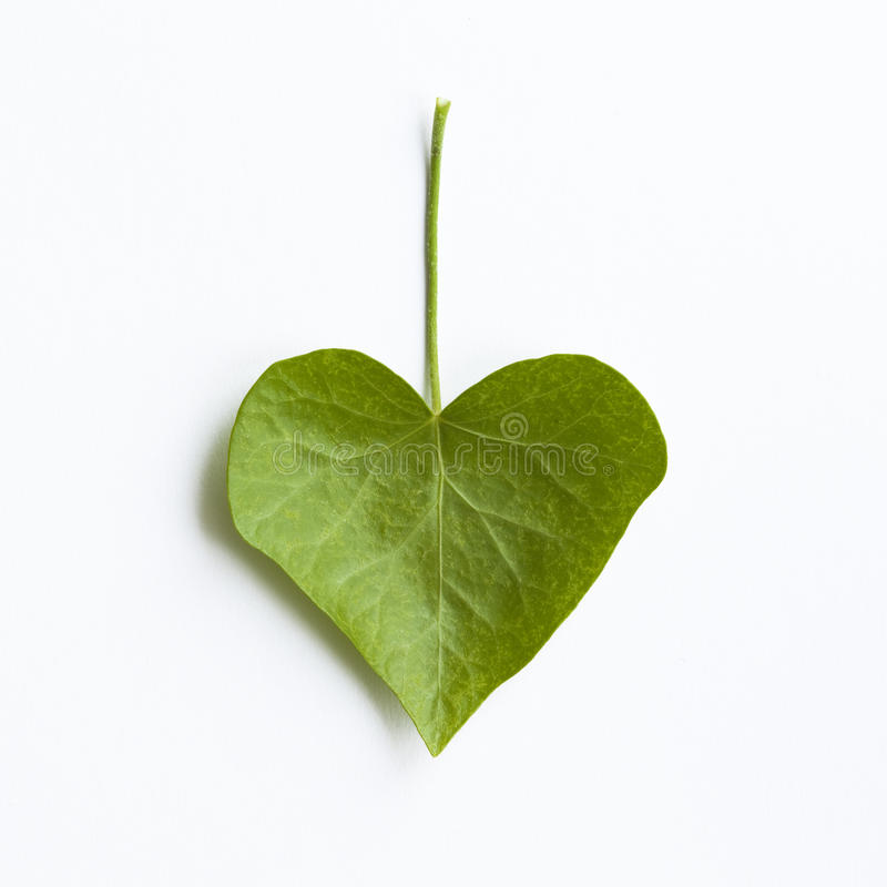 Heart-shaped Efeublatt stockfotografie