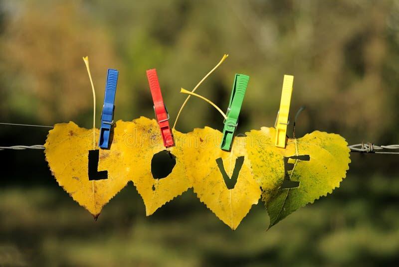 Heart-shaped Fallblätter mit LIEBES-Wort lizenzfreie stockfotos