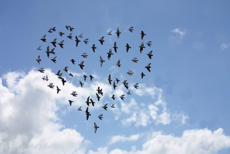 image Stormo di uccelli su vercelli trailer del film