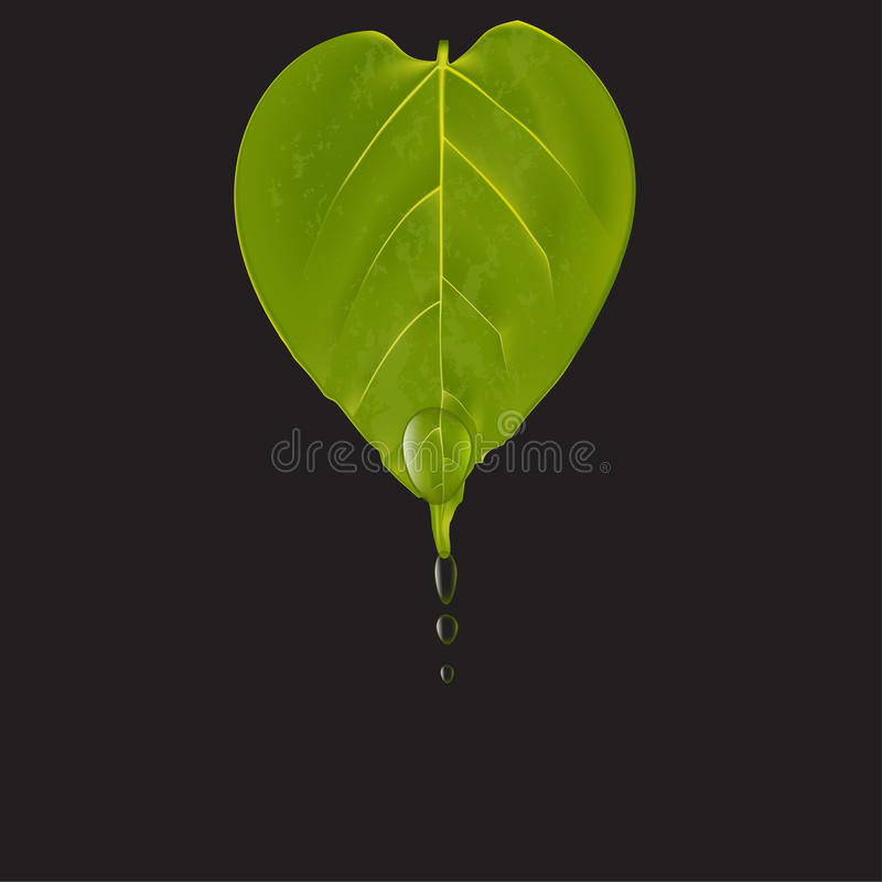 Heart shaped green leaf with water drops on black background, vector illustration stock illustration
