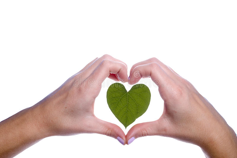 Download Heart Shaped Leaf Outlined By Girls Hands Stock Image - Image: 38121599
