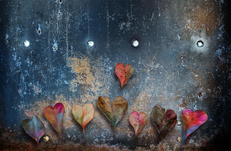 Heart shaped leaves. In rainbow colors on a rusted metal backdrop. Concept for love and its different shapes stock photos