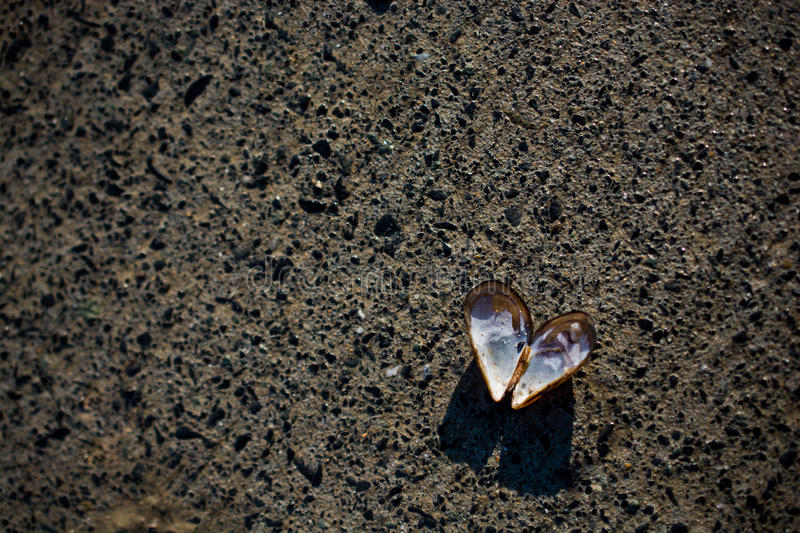 Heart shaped seashell found on concrete background stock image