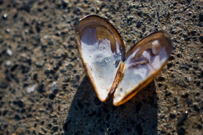 Heart shaped seashell found on concrete background stock photos