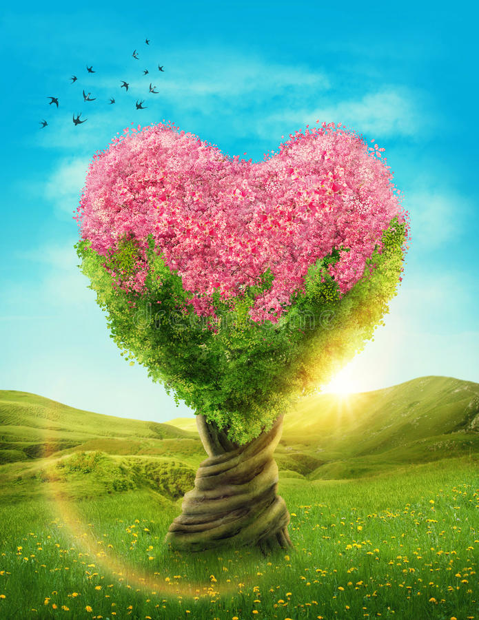 Heart shaped tree. In the meadow royalty free stock images