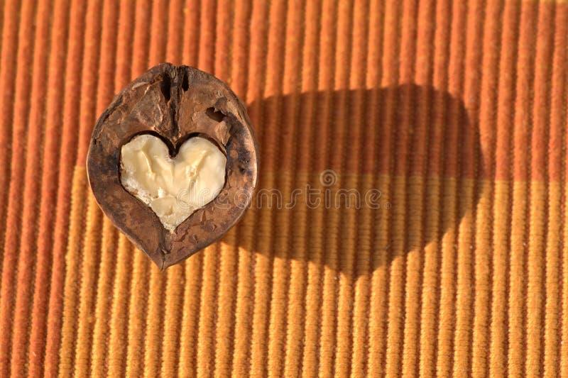 Heart-shaped walnut royalty free stock photography
