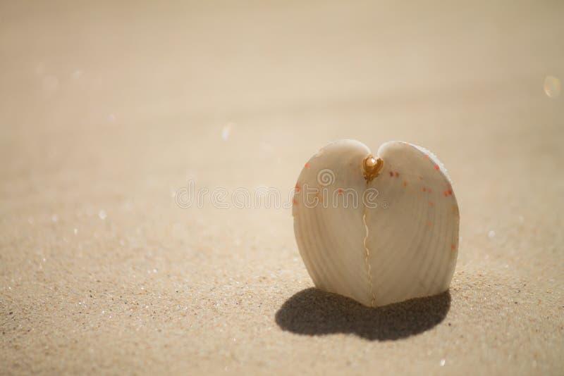 Heart shell. Heart shaped shadow from shell stock photography