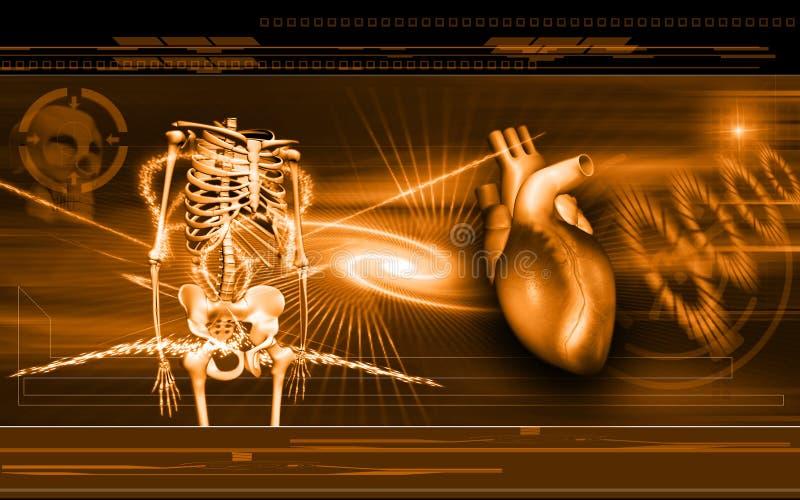 Heart and Skelton stock illustration