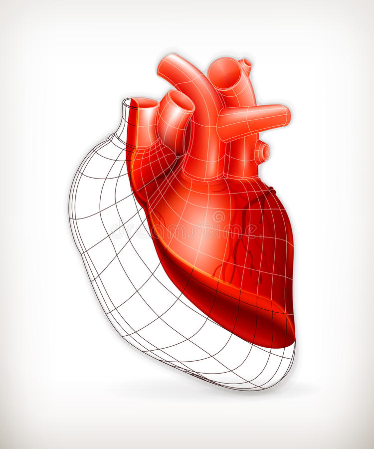 Heart structure royalty free illustration