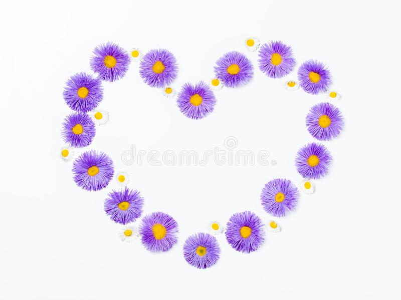 Heart symbol made of violet flowers and chamomile isolated on white background. Flat lay. royalty free stock photo
