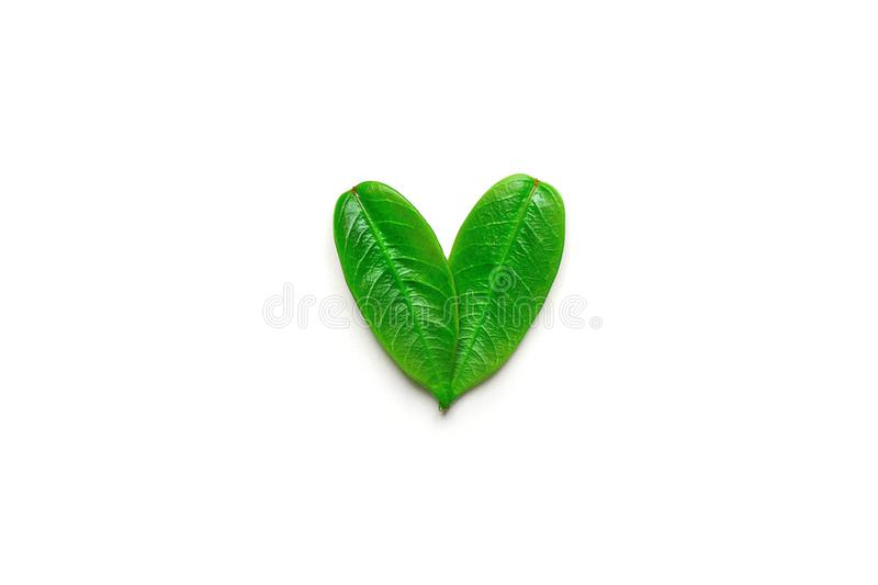 Heart symbol made from young green tree leaves isolated with shadow on solid white background. Environmental conservation plastic. Free vegan recycling concept stock photography