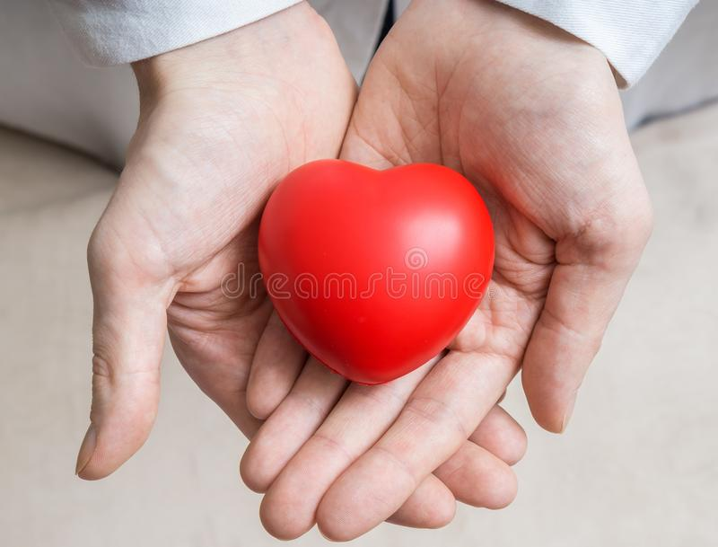 Heart transplantation concept. Doctor holds red heart in hands.  stock photo