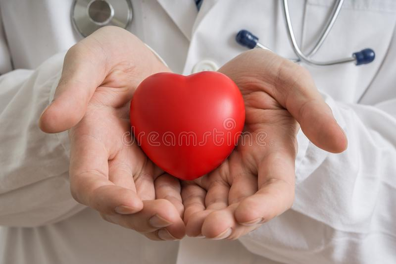 Heart transplantation concept. Doctor holds red heart model in hands.  royalty free stock photos