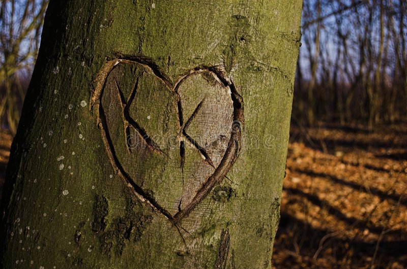 Heart on tree. In autumn forest royalty free stock image