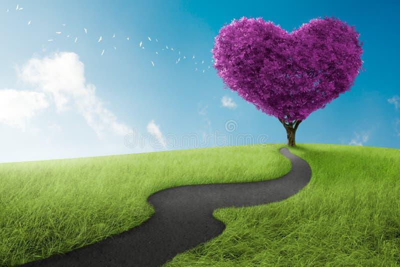 Heart tree. Heart shape tree in lavender meadow for love symbol