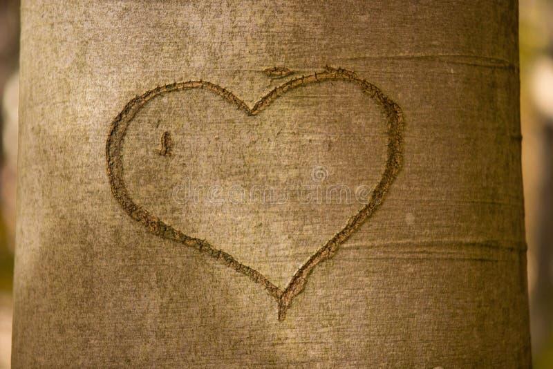 Heart on tree trunk stock photos