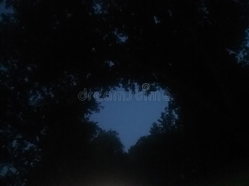 Heart between the trees stock photo