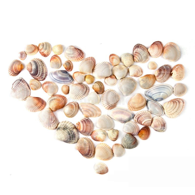 Heart for valentine's day from color shells. Heart for valentine's day from ocean shells stock photo