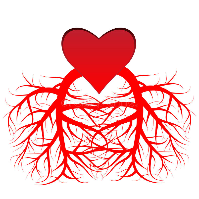 The Heart And The Veins Stock Vector Illustration Of Blood 30407126