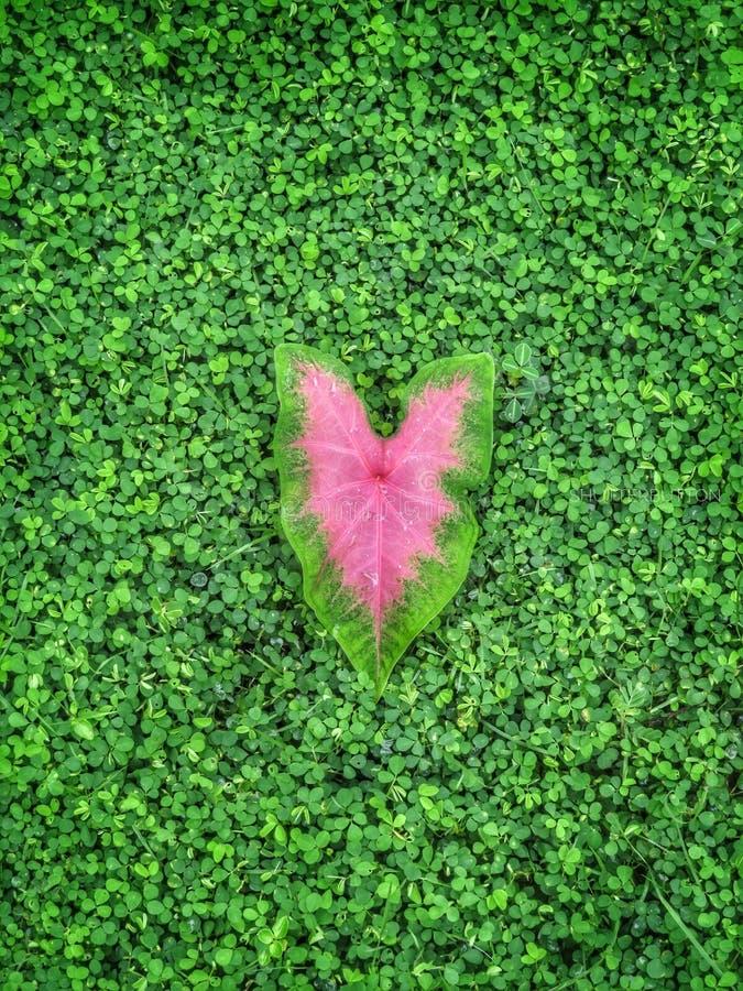 Heart royalty free stock photo