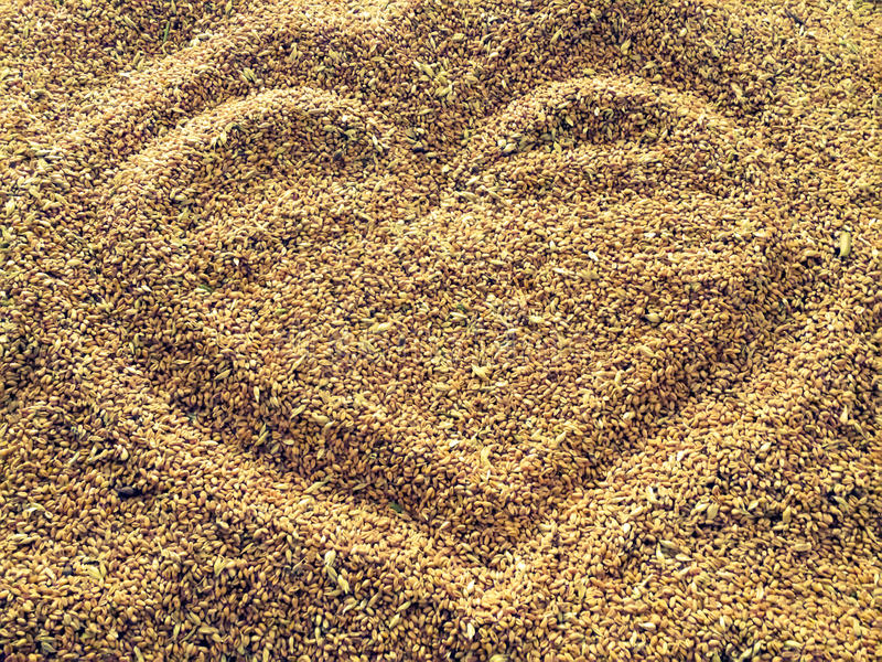 Heart in a wheat. Wheat background with heart shape drawing stock photo