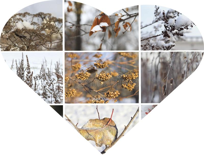 Heart  winter collage stock images